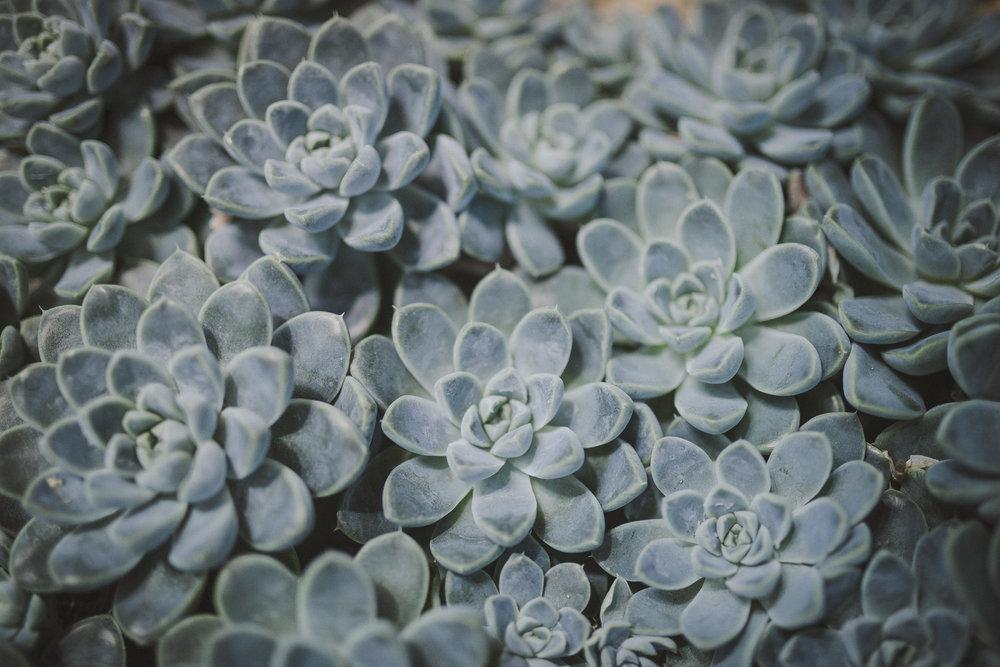 Edvard Andersons växthus Foto Emily Dahl-4.jpg