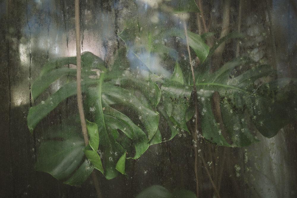 Edvard Andersons växthus Foto Emily Dahl-6.jpg