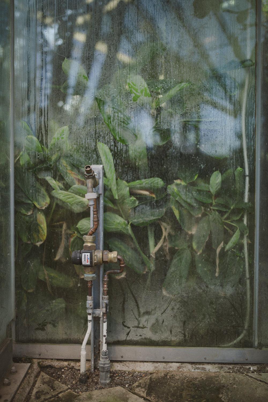 Edvard Andersons växthus Foto Emily Dahl-7.jpg