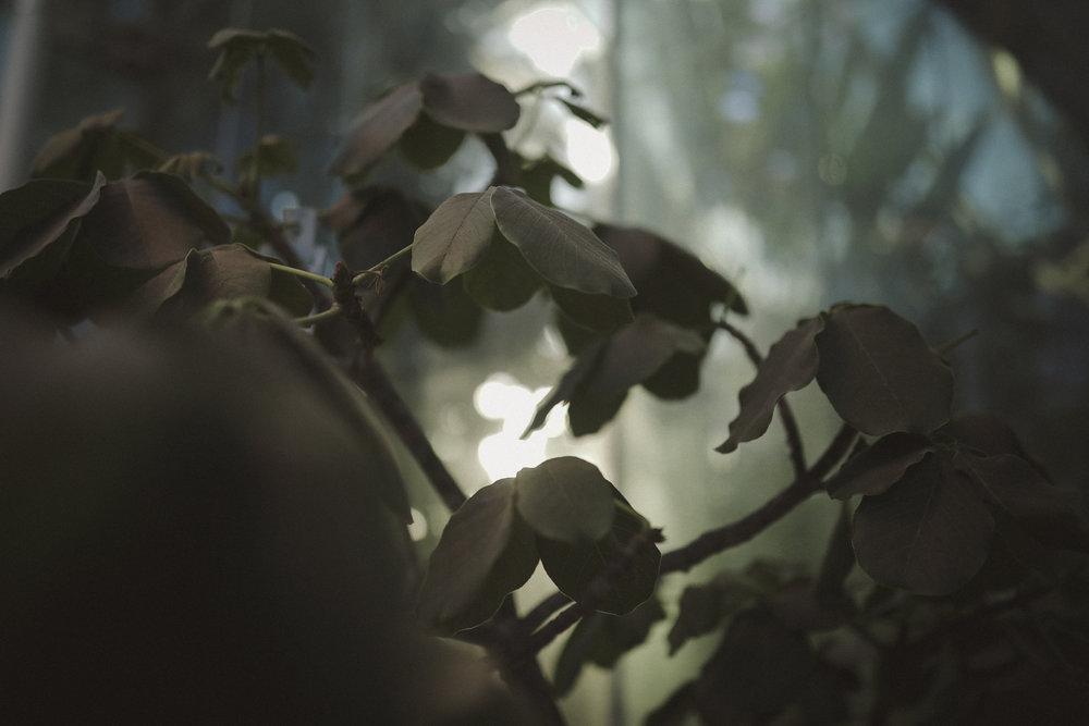 Edvard Andersons växthus Foto Emily Dahl-8.jpg