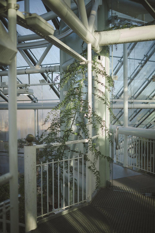 Edvard Andersons växthus Foto Emily Dahl-9.jpg