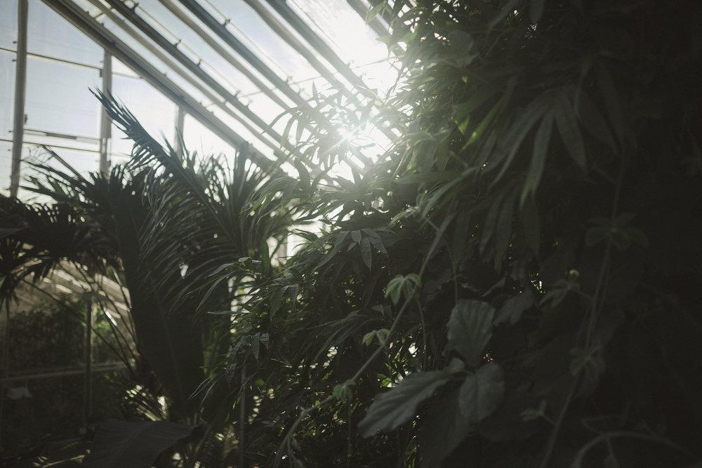 Edvard Andersons växthus Foto Emily Dahl-10.jpg