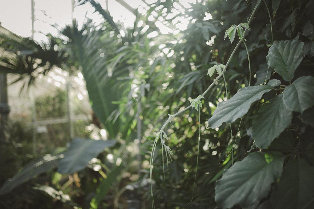 Edvard Andersons växthus Foto Emily Dahl-12.jpg