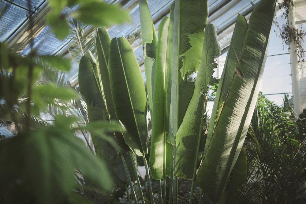 Edvard Andersons växthus Foto Emily Dahl-11.jpg