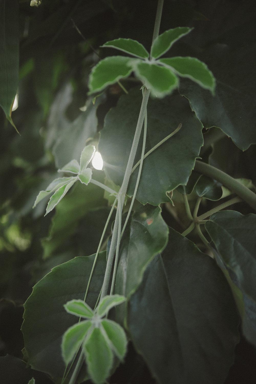 Edvard Andersons växthus Foto Emily Dahl-13.jpg