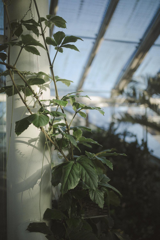 Edvard Andersons växthus Foto Emily Dahl-14.jpg