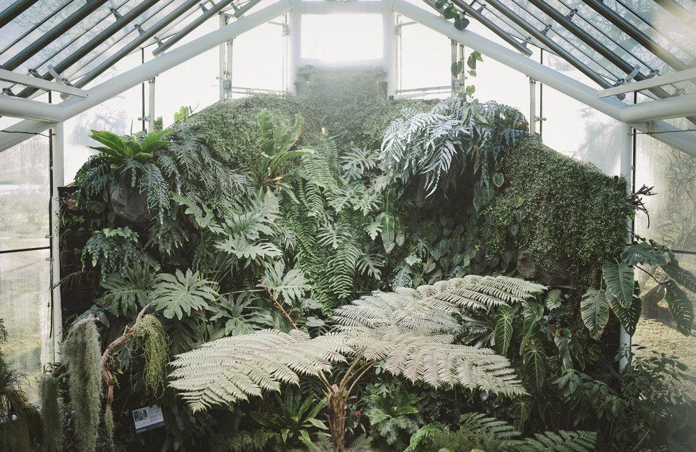 Edvard Andersons växthus Foto Emily Dahl-15.jpg