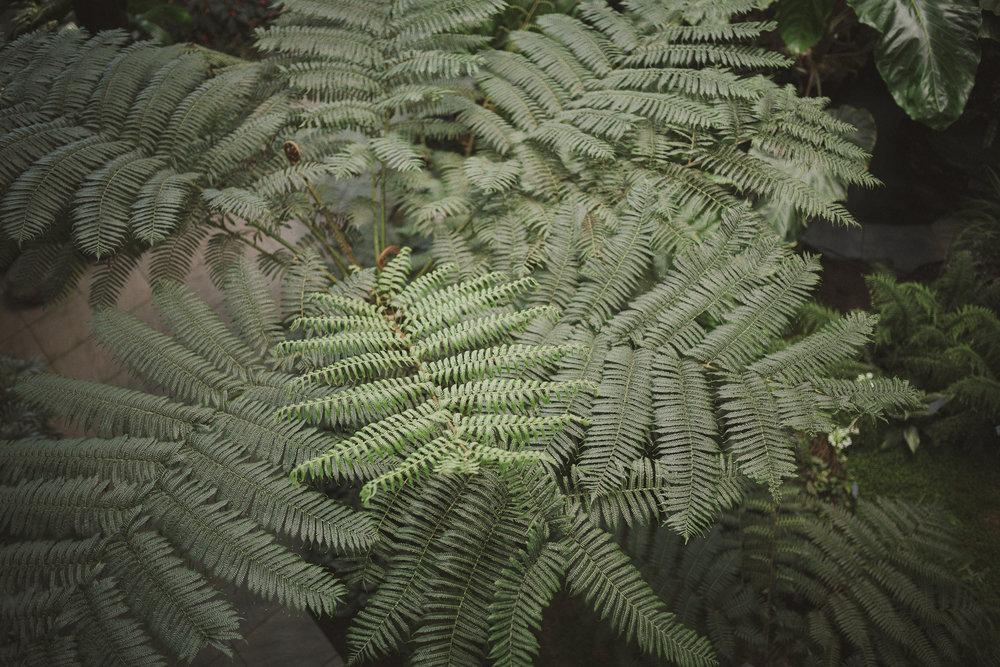 Edvard Andersons växthus Foto Emily Dahl-16.jpg