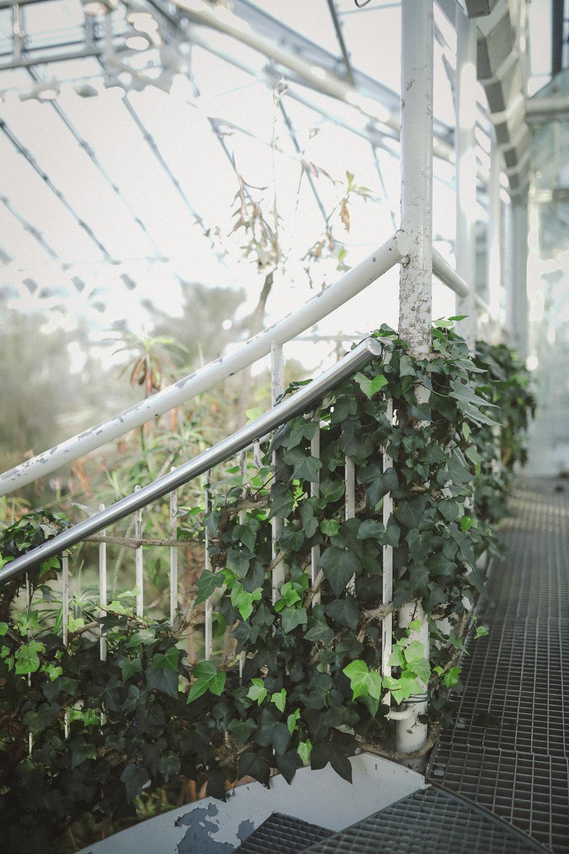 Edvard Andersons växthus Foto Emily Dahl-17.jpg