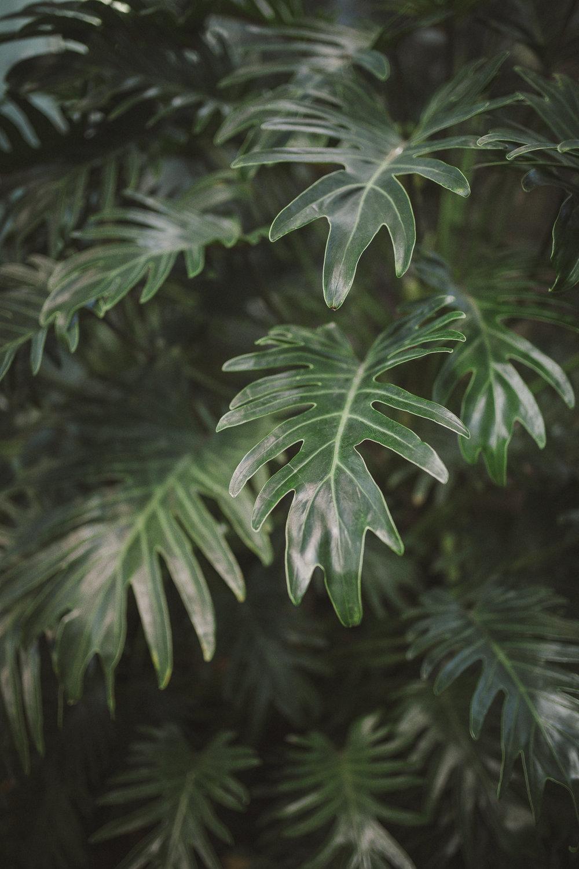 Edvard Andersons växthus Foto Emily Dahl-21.jpg