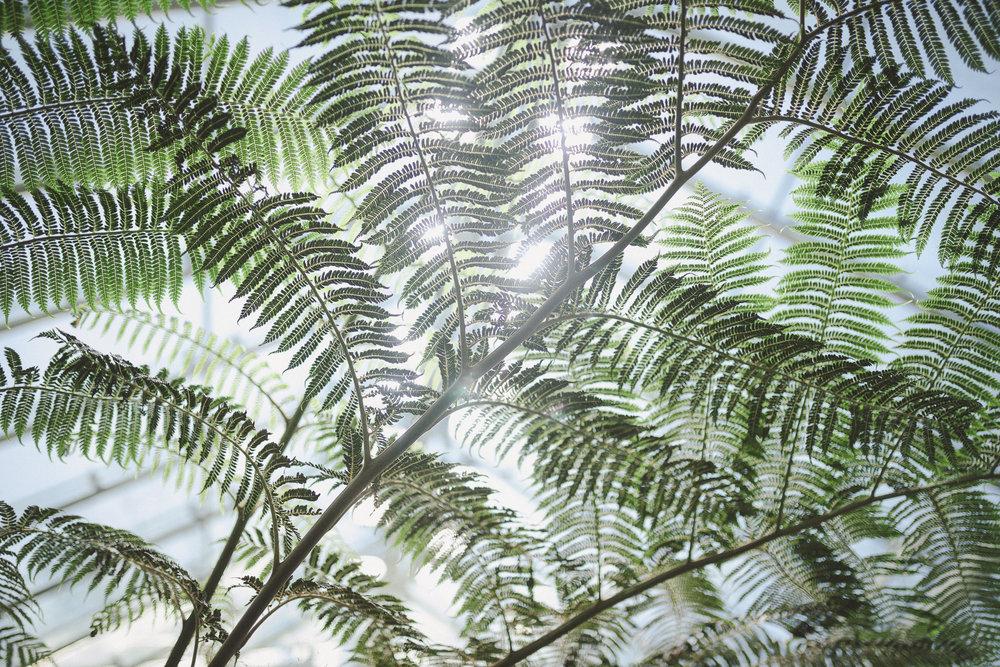 Edvard Andersons växthus Foto Emily Dahl-20.jpg