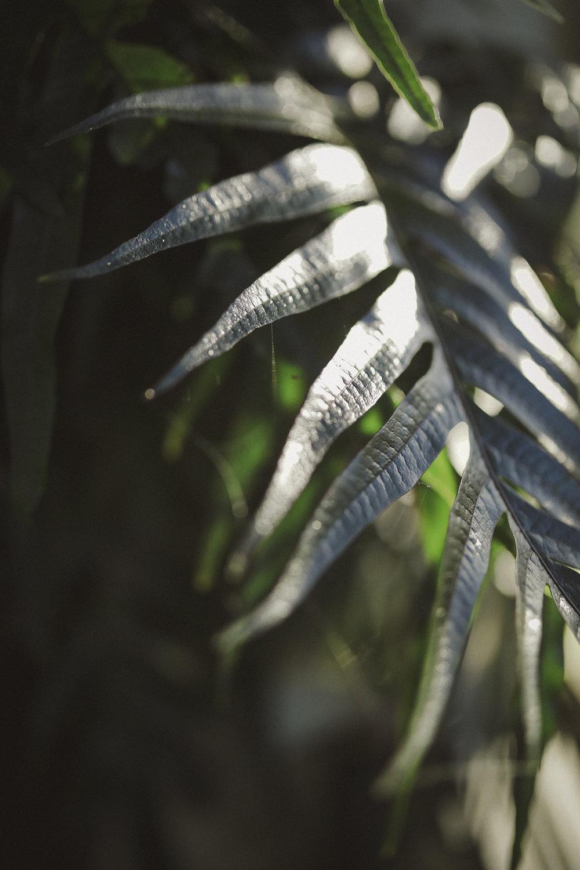 Edvard Andersons växthus Foto Emily Dahl-23.jpg