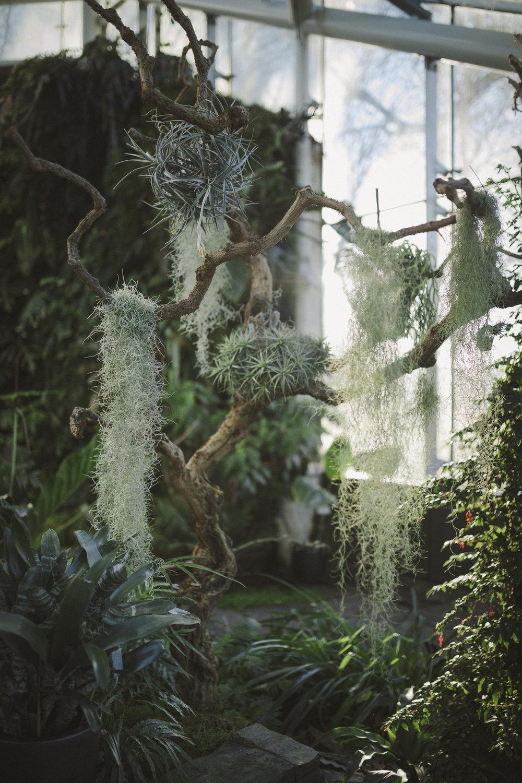 Edvard Andersons växthus Foto Emily Dahl-22.jpg