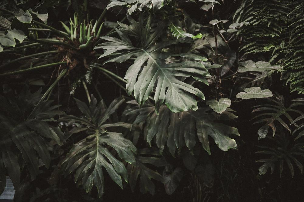 Edvard Andersons växthus Foto Emily Dahl-25.jpg
