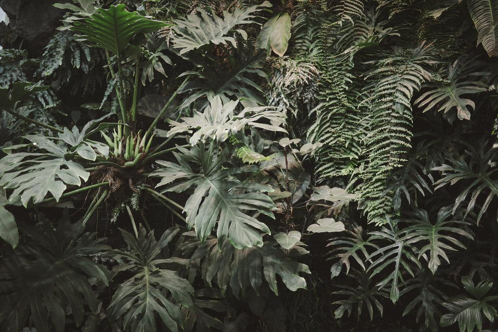 Edvard Andersons växthus Foto Emily Dahl-24.jpg