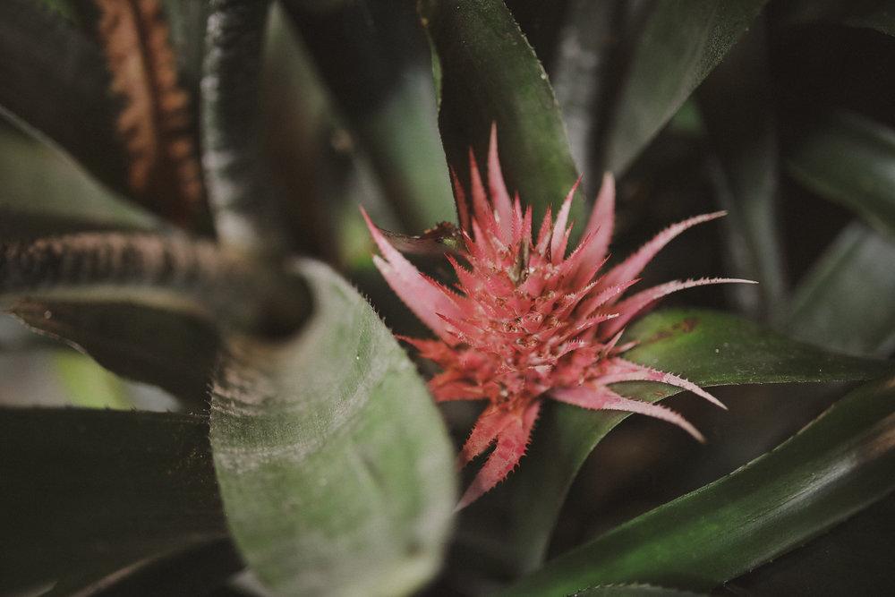 Edvard Andersons växthus Foto Emily Dahl-26.jpg