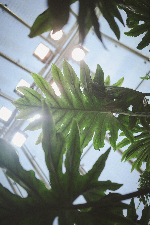 Edvard Andersons växthus Foto Emily Dahl-27.jpg