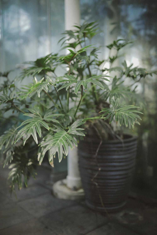 Edvard Andersons växthus Foto Emily Dahl-29.jpg