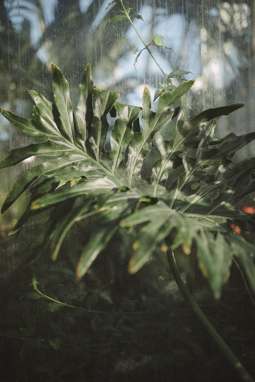 Edvard Andersons växthus Foto Emily Dahl-28.jpg