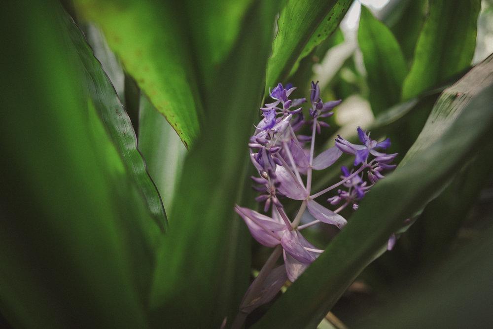 Edvard Andersons växthus Foto Emily Dahl-30.jpg