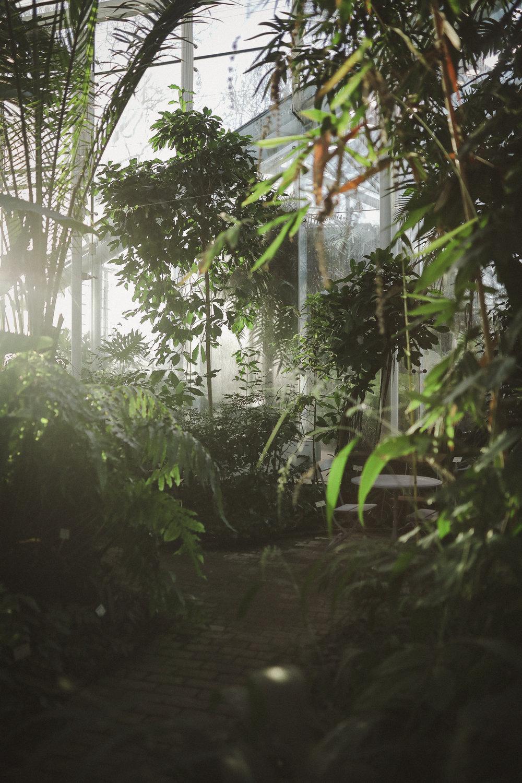 Edvard Andersons växthus Foto Emily Dahl-31.jpg