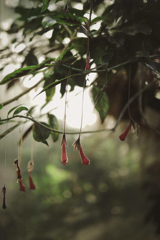 Edvard Andersons växthus Foto Emily Dahl-33.jpg