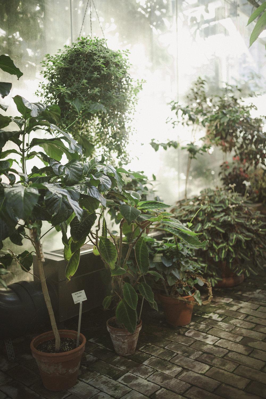 Edvard Andersons växthus Foto Emily Dahl-32.jpg