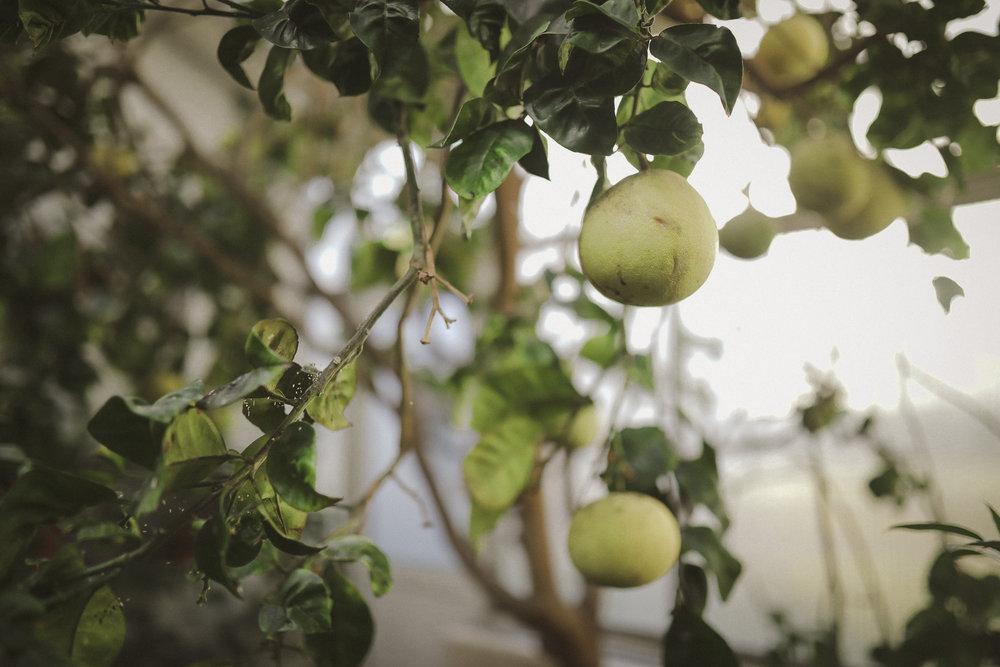 Edvard Andersons växthus Foto Emily Dahl-35.jpg