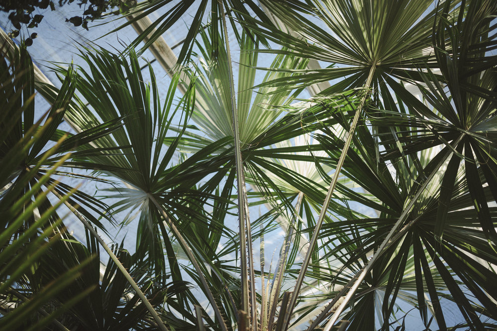 Edvard Andersons växthus Foto Emily Dahl-34.jpg