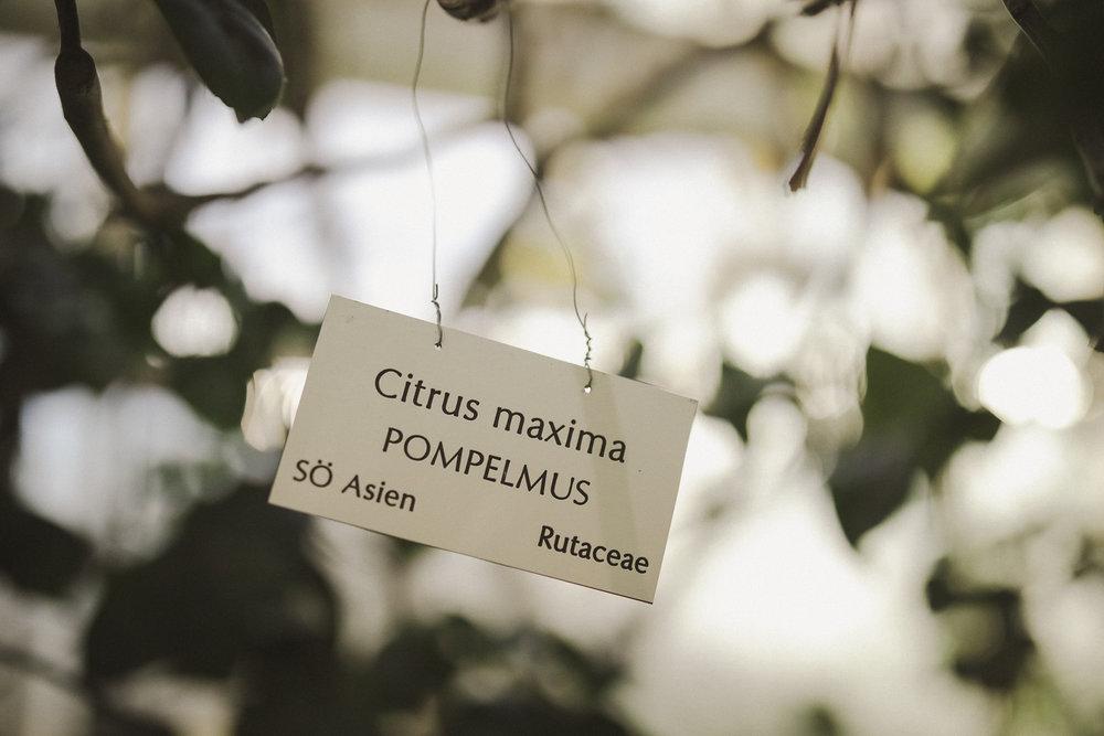 Edvard Andersons växthus Foto Emily Dahl-36.jpg