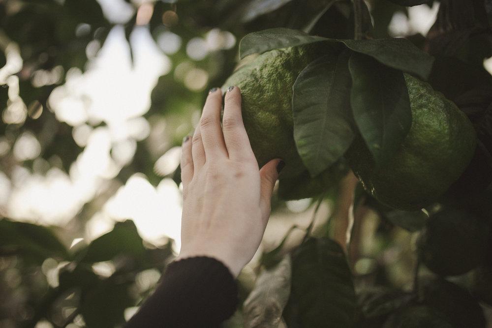 Edvard Andersons växthus Foto Emily Dahl-37.jpg