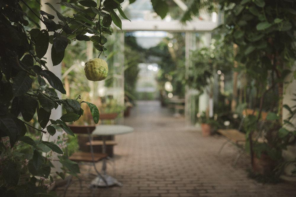 Edvard Andersons växthus Foto Emily Dahl-38.jpg