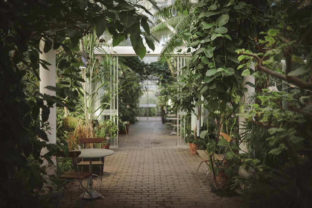 Edvard Andersons växthus Foto Emily Dahl-40.jpg