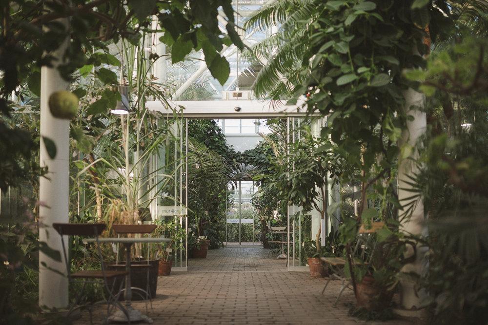 Edvard Andersons växthus Foto Emily Dahl-39.jpg