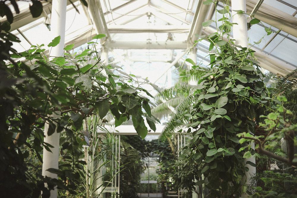 Edvard Andersons växthus Foto Emily Dahl-41.jpg