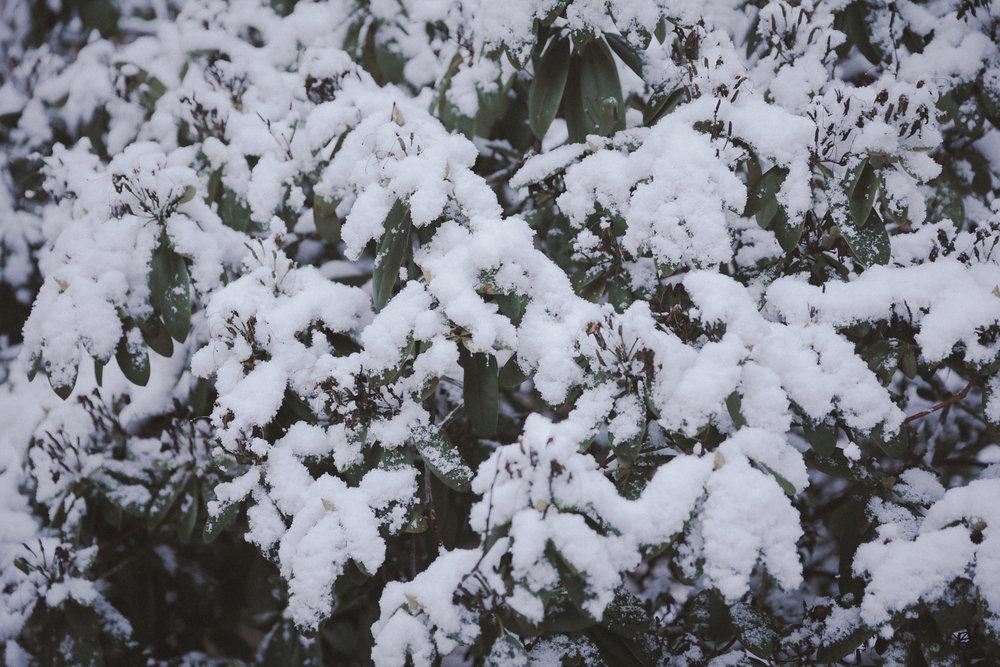 Snow Photo Emily Dahl-5.jpg