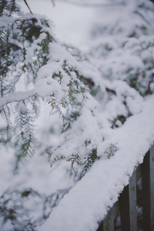 Snow Photo Emily Dahl-8.jpg