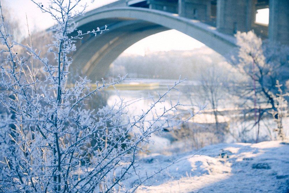 IMG_9674 Frosty.jpg