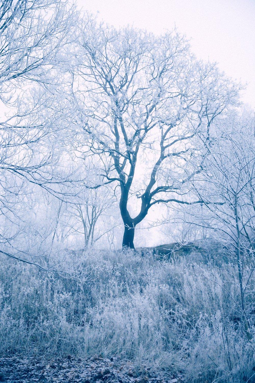 IMG_9692 Frosty.jpg