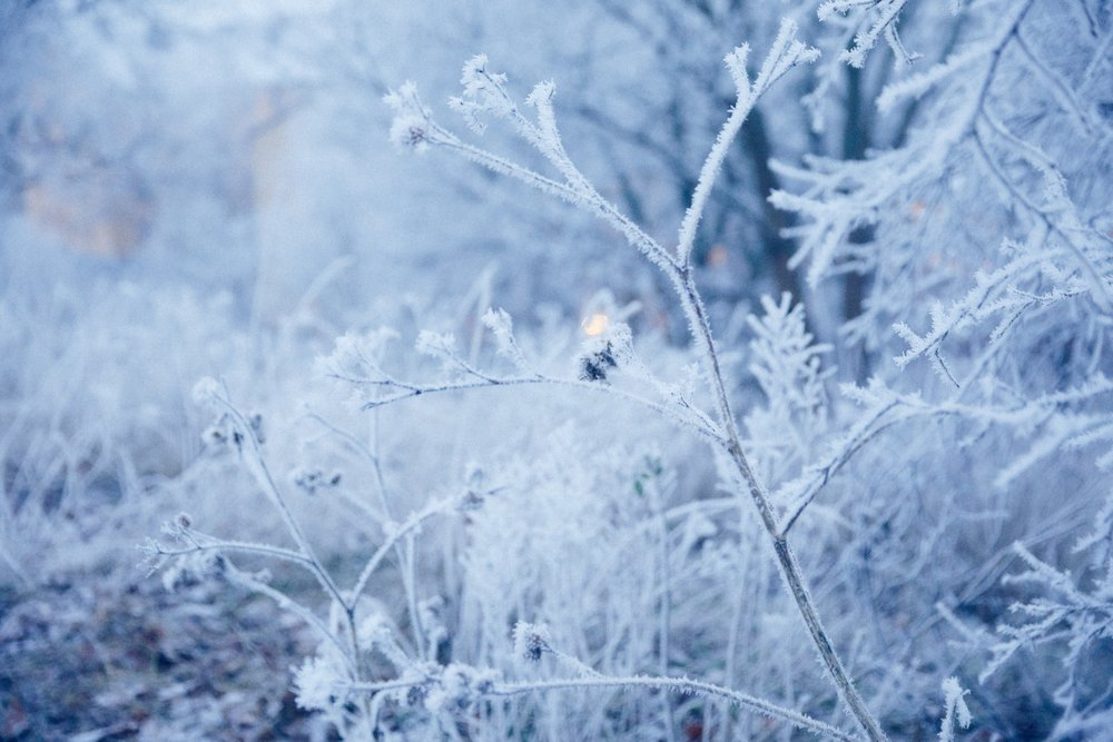 IMG_9707 Frosty.jpg
