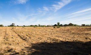 Le champ mesure 1 hectare
