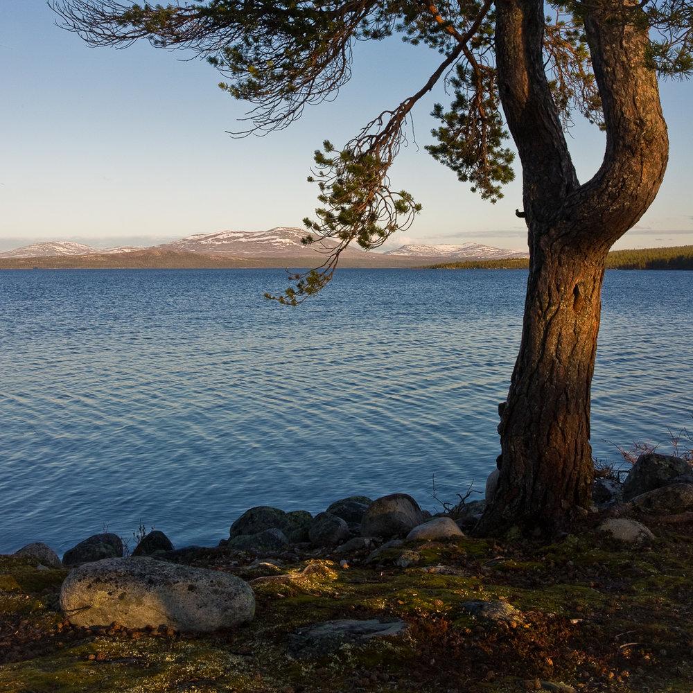 Norsk Mestring har et sunt syn på deltagerne
