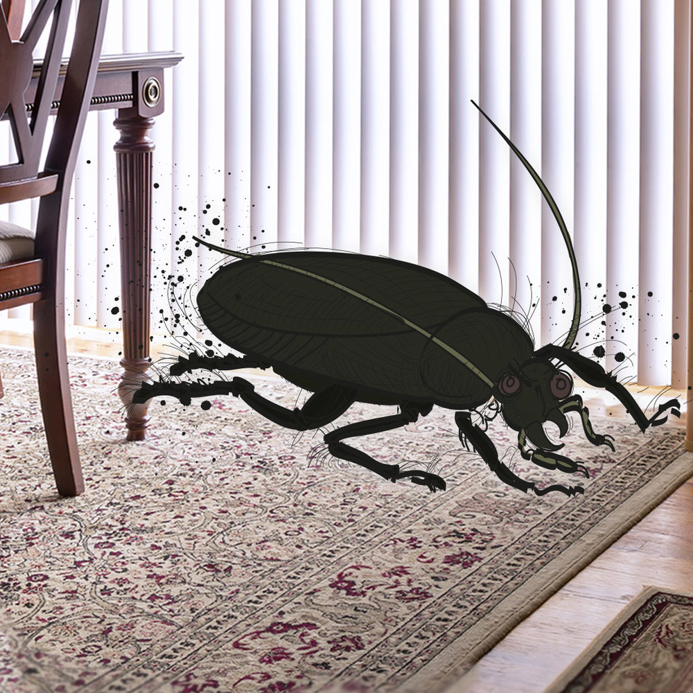 """I see a large insect crawling across the room"""