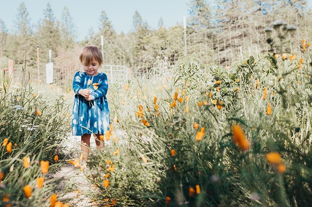 Barefoot, flower picking, sweetie pie . . . . . #clickinmoms  #magicofchildhood  #oregon  #childhoodunplugged  #momswithcameras  #candidchildhood  #lifewellcaptured  #lookslikefilm  #wildandbravelittles #2yearsold  #runwildmychild  #my_magical_moments  #thebloomforum  #kidsforreal  #lifestylephotography #childofig  #thesincerestoryteller  #let_there_be_delight  #ourcandidlife  Fff#clickmagazine  #austinphotographer #the_sugar_jar #mytinymoments  #galleryoflightfeature  #smalpresets  #thesweetlifeunscripted  #ig_motherhood  #jj_its_kids  #theheartcaptured  #letthemexplore