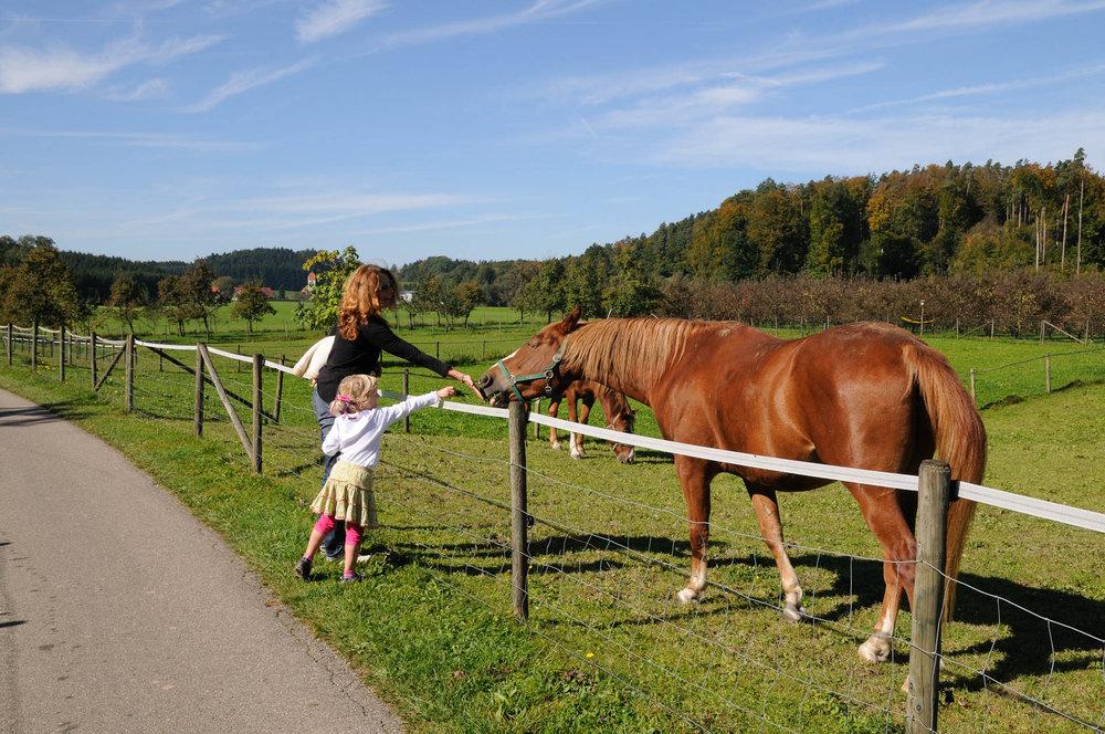 Landleben auch für die Kleinen - Gasthaus Seerose in Nitzenweiler bei Kressbronn am Bodensee