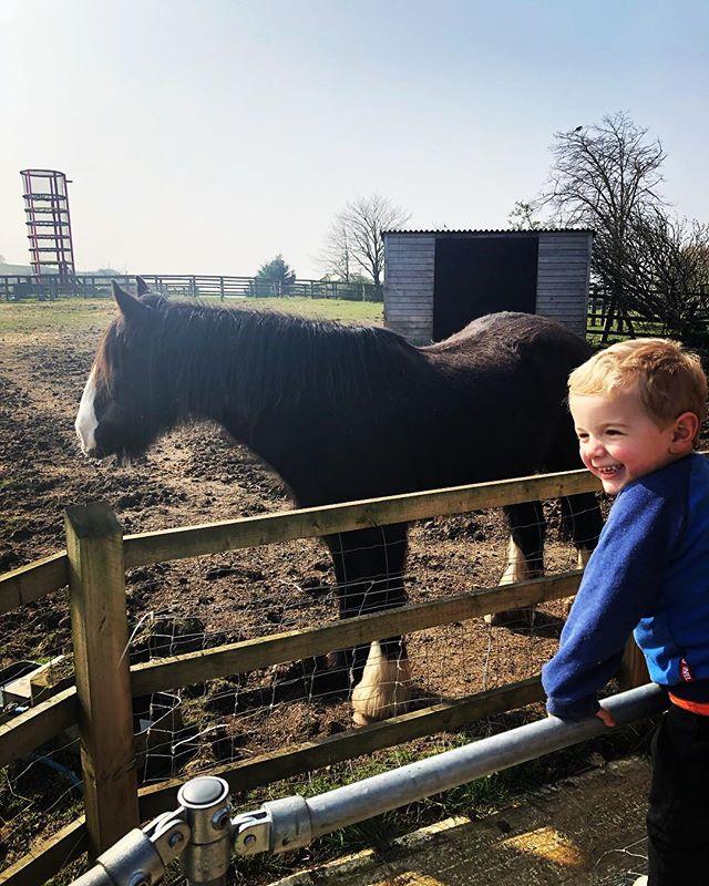Gorgeous day for a farm visit 🐷🐄🐐🐴☀️☀️☀️ #leevalleyfarm #horseorponyordonkey🤷♀️ #saturdayfun #familyday #springishere
