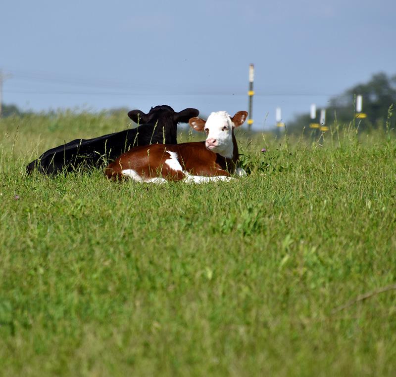 grass-fed-beef.jpg