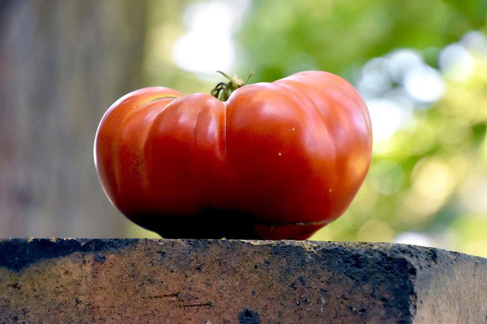 organic-Indiana-tomato.jpg