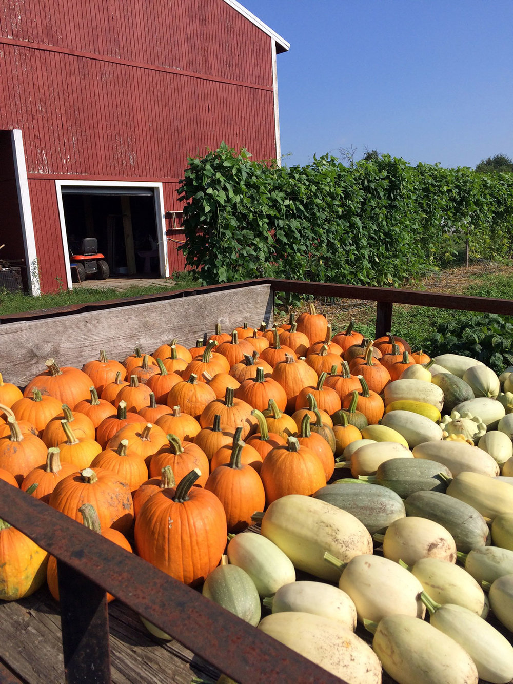 organic-pumpkins.jpg