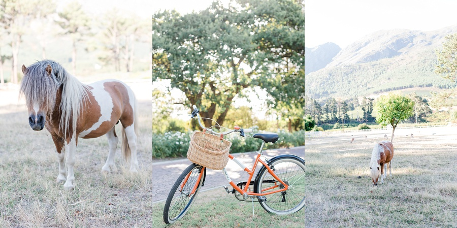 Darren Bester - Cape Town Wedding Photographer - The Royal Portfolio -La Residence - Franschhoek - Shirley and Andre_0094.jpg
